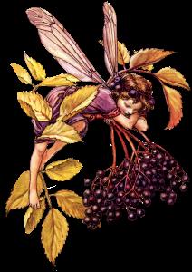 elfetto-fiore-3-1-1.png
