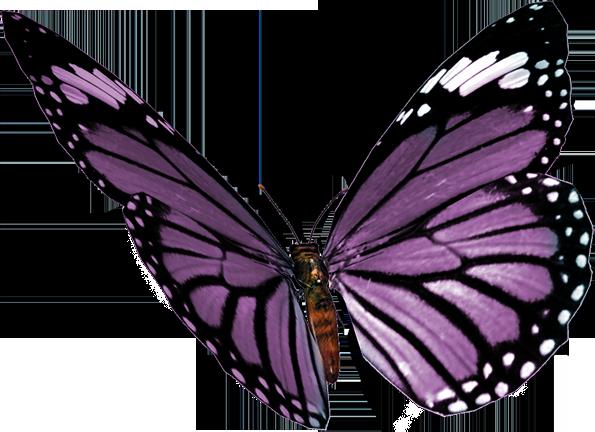 Farfalle: Farfalle (141