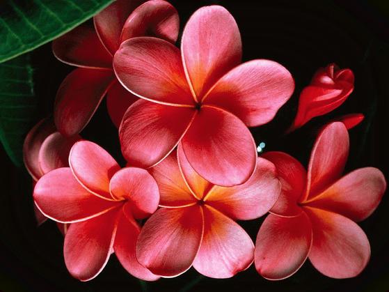 Risultati immagini per tubes fiorellini
